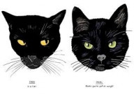 Boek - All Black Cats are not Alike