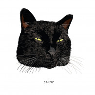 Book - All Black Cats are not Alike